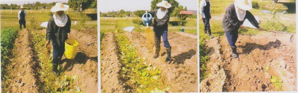 xử lý đất trồng rau với EM bokashi