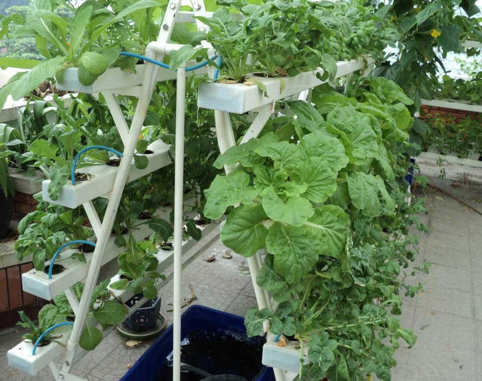 trồng rau thủy canh bằng phương pháp nhỏ giọt