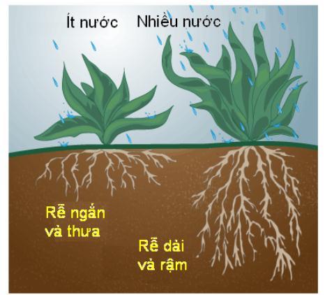 ảnh hưởng của ẩm độ đất đối với cây trồng