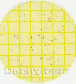 đĩa đếm petrifilm EL 3M
