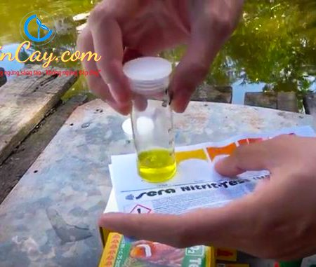 Test O2 Sera - Kiểm tra nhanh Oxi