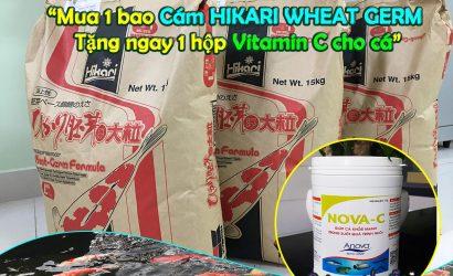 Mua 1 bao HIKARI WHEAT GERM được tặng ngay 1 hộp Vitamin C cho cá