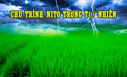 chu trình Nito trong tự nhiên
